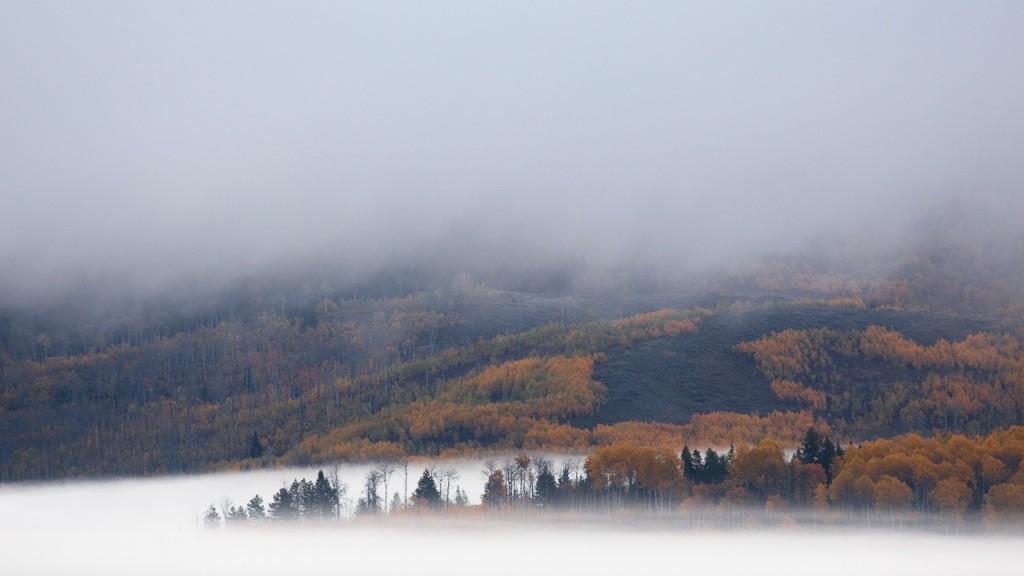 Fog, Grand Teton National Park