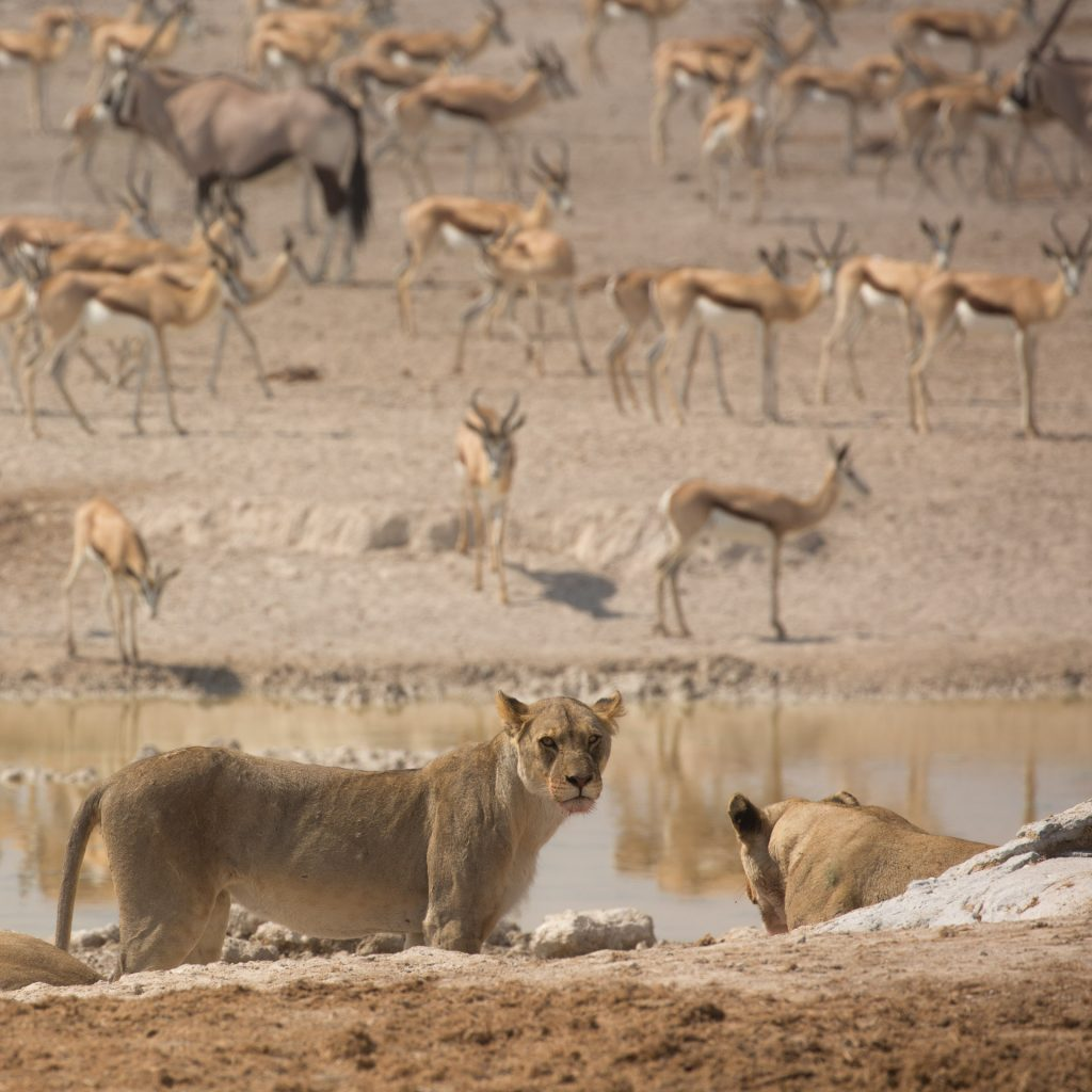 At the waterhole, Etosha National Park